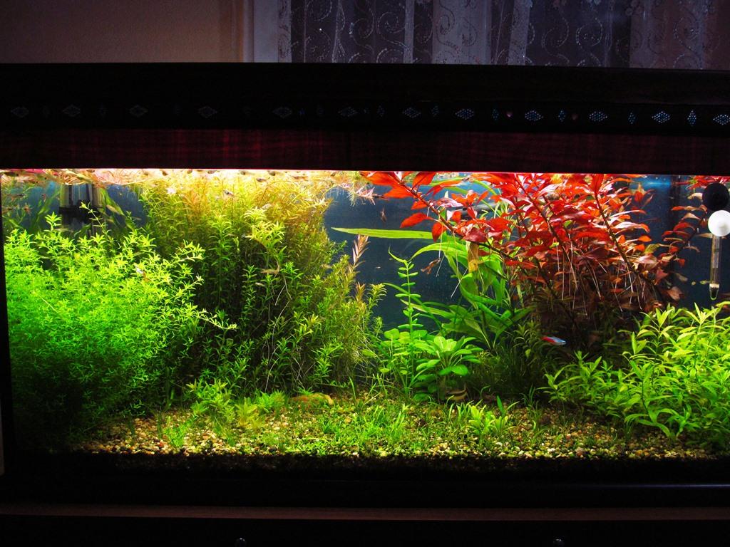 Bitkili Akvaryum ve Taban Kurulumu