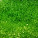 Utricularia Graminifolia (1)